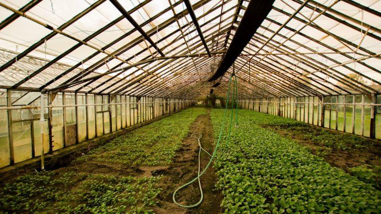 Kertészeti üzemek