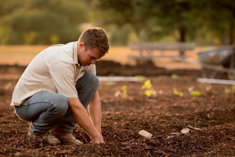 Kertészet -ültetvénytelepítés és gyógynövénytermesztés támogatása pályázat 2021